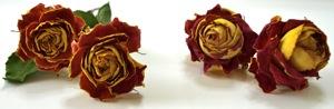 dry-rose01.jpg