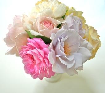 バラの花の写真