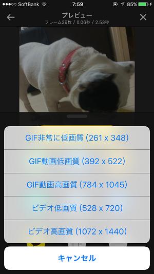 gif_livephotos206