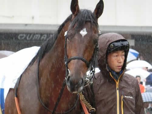 【皐月賞】栗東競馬関係者「サトノダイヤモンドはマカヒキより強い」