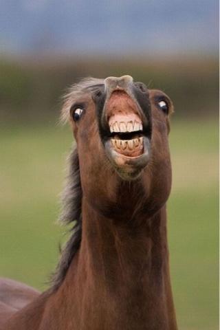 アンチが最も多い馬