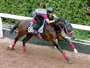 【神戸新聞杯】ティルナノーグ「前走は参考外、危ない人気先行馬」