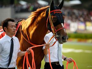 グランデッツァ引退、種牡馬入りへ