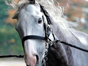 【有馬記念】ゴールドシップのラストランは内田博騎手