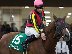 【阪神JF】メジャーエンブレム調教助手「こんな凄い馬に巡り合ったことがない」