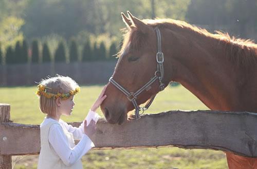 馬は人の顔を判別することが可能www