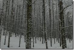2011_02_18se003