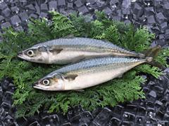 「青魚に豊富なオメガ3脂肪酸でうつ病リスク半減!サラダ油をアレに変えれば効果アップも」の続きを読む