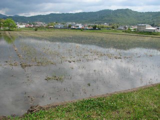 Shirokaki2