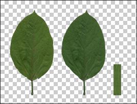 Xfrog Plants Texture