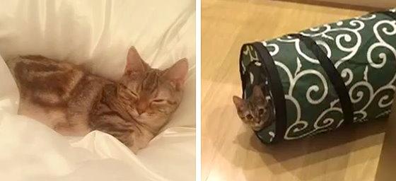 ワイドナショー画像 HKT48指原莉乃の飼い猫 2016年1月1日