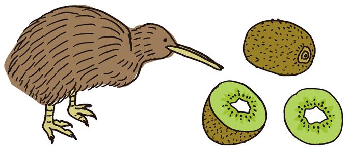 キウイ(鳥)とキウイフルーツ